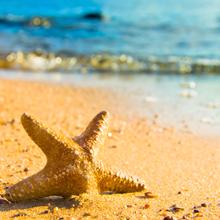 O jovem e as estrelas do mar