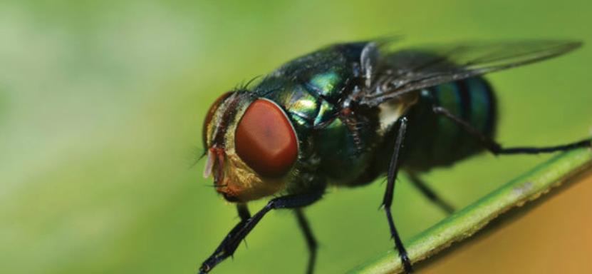 Cuidado com as moscas!