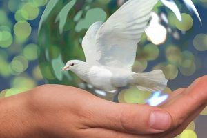 paz-interior