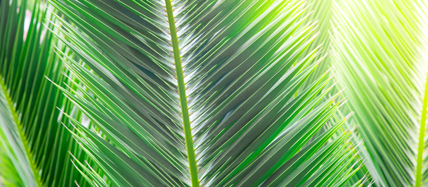 palm-sunday-banner-