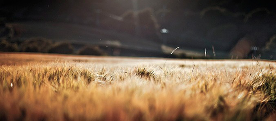 Cain's field