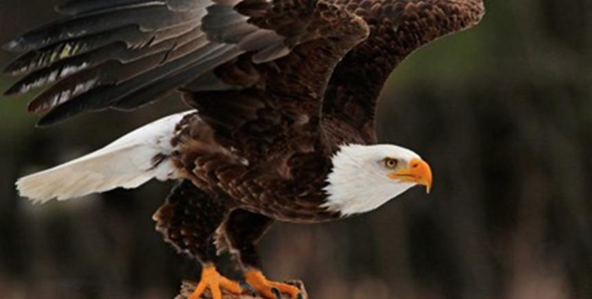 The wings of faith like an eagle