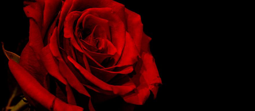 rose1 1