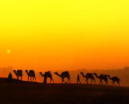 Facing the desert