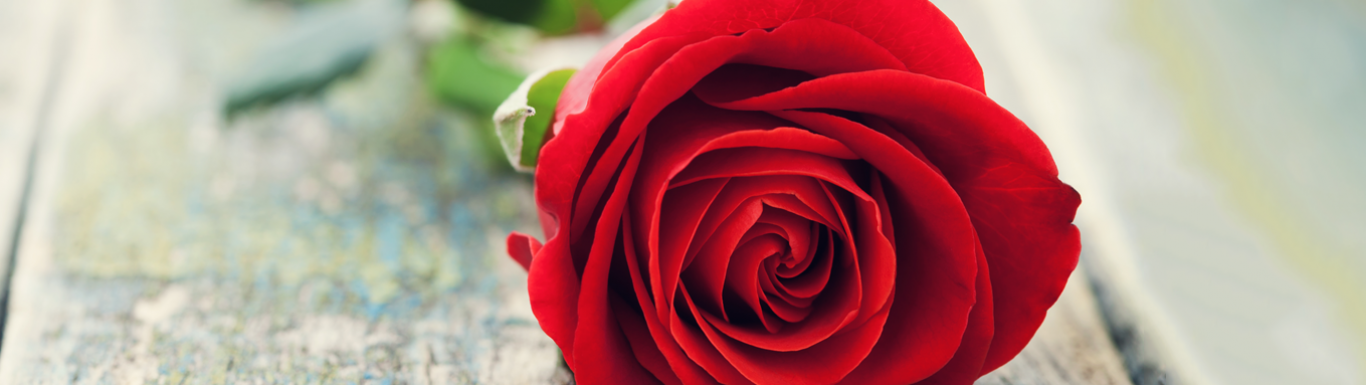 Can one red rose make a difference in your life? Watch this to find out…