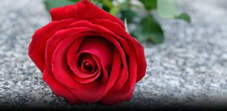 The Blessed Red Rose